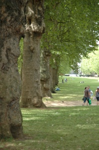 Green trees in Green Park